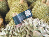 Millions of Durians Will Be Tracked on the Blockchain for Thailand's Largest Durian Exporter