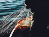 How Blockchain Is Bringing Transparency and Improved Efficiencies in Seafood Value Chains